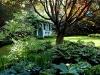 Ivy-Cottage-3.jpg