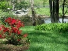 River-of-Dreams-Red-Flowers.jpg